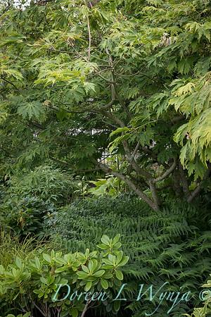 Lily Maxwell - garden designer_7524