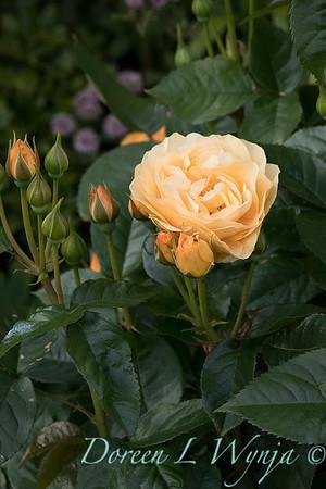 Lily Maxwell - garden designer_7506