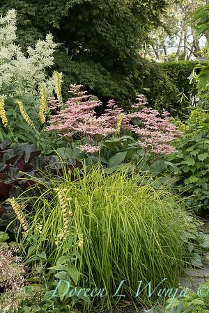 Lily Maxwell - garden designer_7528