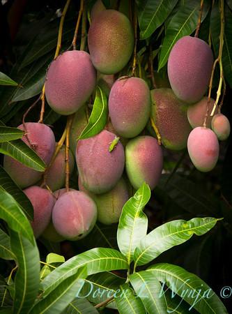 Mango's_307