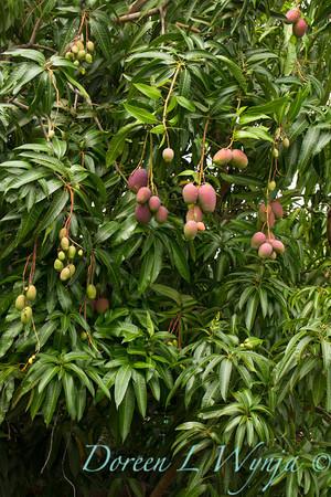 Mango's_314