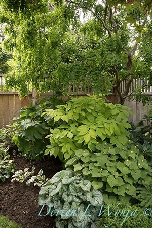 Paul Murphy - a Sidney garden_7646