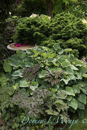 Paul Murphy - a Sidney garden_7647