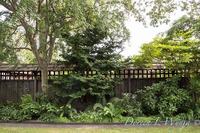Paul Murphy - a Sidney garden_7661