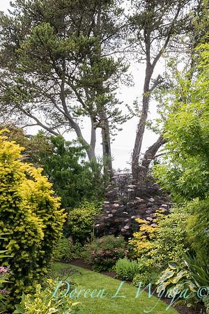 Paul Murphy - a Sidney garden_7653