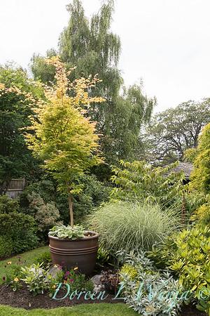 Paul Murphy - a Sidney garden_7639
