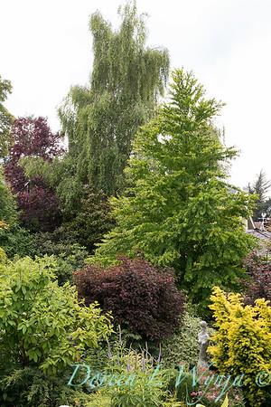 Paul Murphy - a Sidney garden_7643