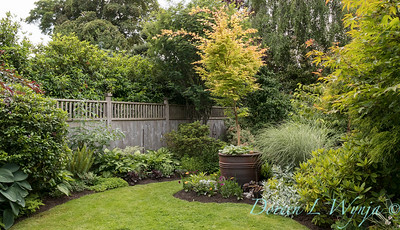 Paul Murphy - a Sidney garden_7638