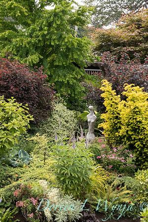 Paul Murphy - a Sidney garden_7642
