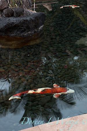 Entryway - koi pond_9197