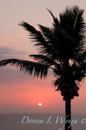 Palm tree silhouette - sunset_9236