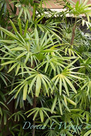 Giest Garden_9249