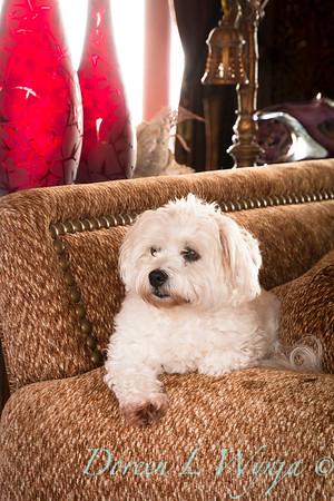 Lola white dog_9137