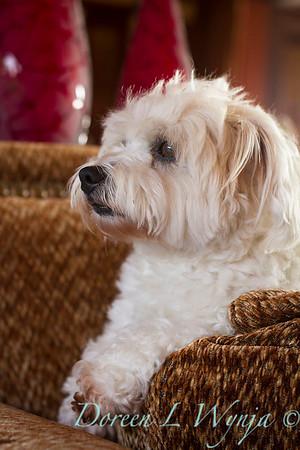 Lola white dog_9135