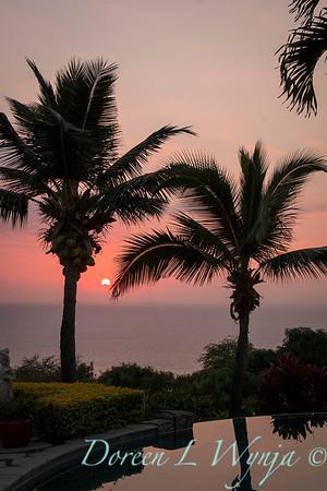 Palm tree silhouette - sunset_9234