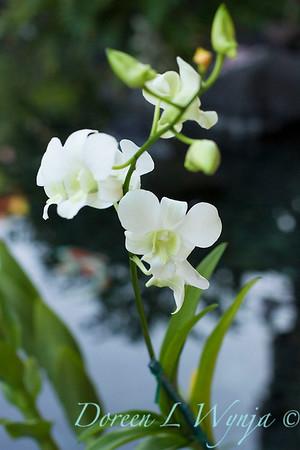 Giest Garden_9239