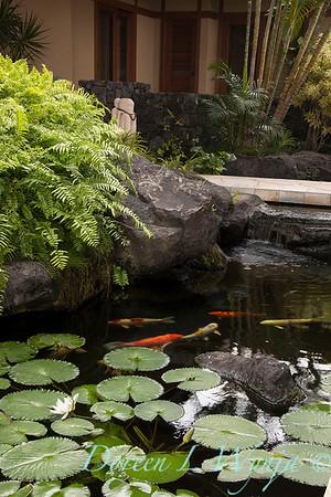 Lotus - Koi pond_3581