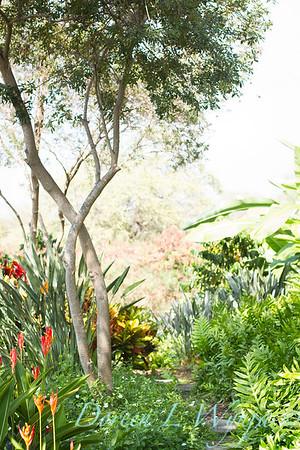 Tropical garden path - Heliconia psittacorum - Phymatosorus fern_3526
