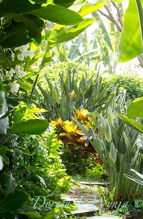 Tropical garden path_3570