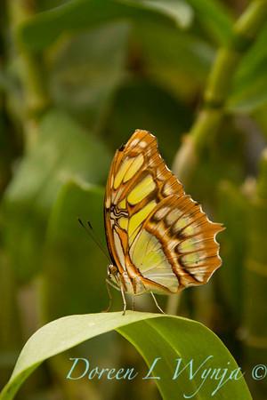 Butterfly_7244
