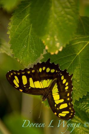 Butterfly_7337