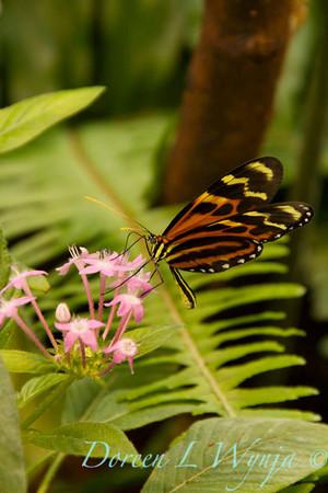 Butterfly_7258