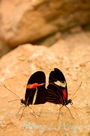 Butterfly_7422