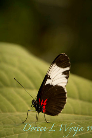 Butterfly_7346