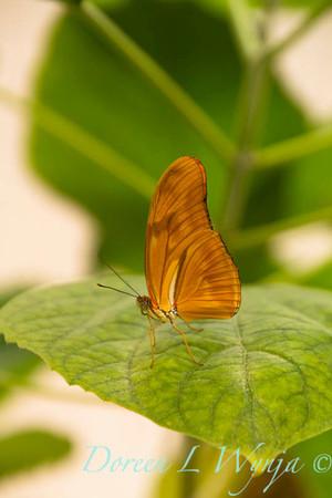 Butterfly_7403