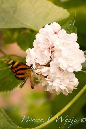 Butterfly_7280