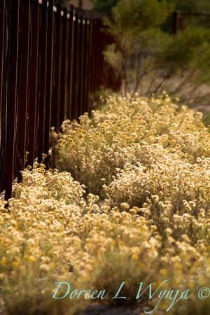 Ocotillo metal fence_5703