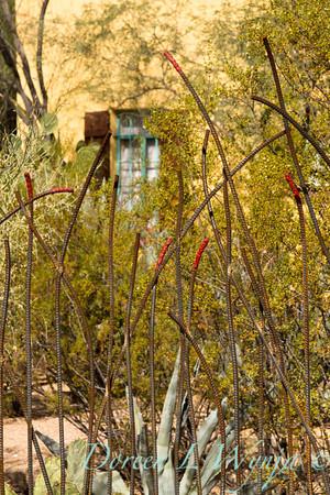 Ocotillo metal fence_5718