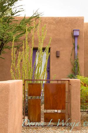 Fouquieria splendens rusty metal gate_5751