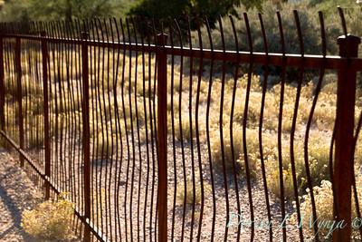 Ocotillo metal fence_5705