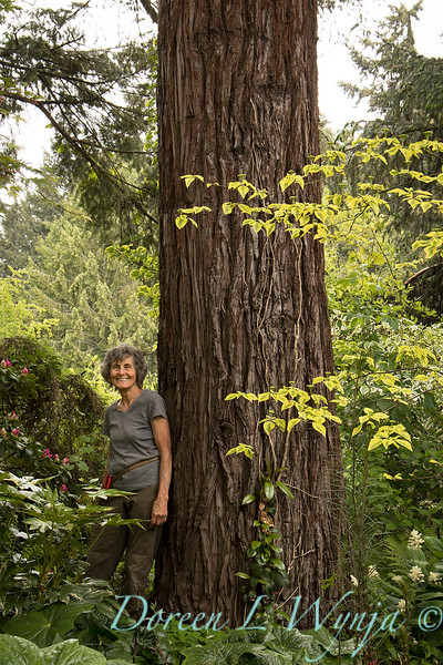 Marietta tree hugger_5216
