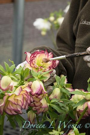 Marietta doing pollination_1284