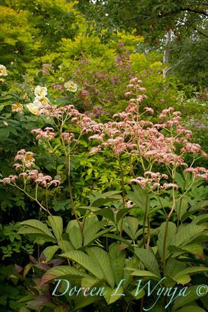 Northwest Garden Nursery__009