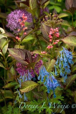 Northwest Garden Nursery__017