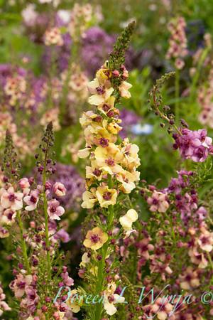Northwest Garden Nursery__076