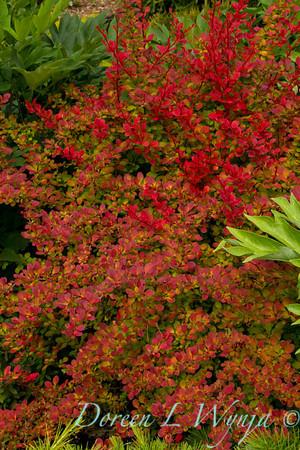 Northwest Garden Nursery__053