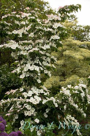 Northwest Garden Nursery__078