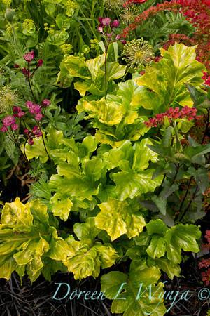 Northwest Garden Nursery__068