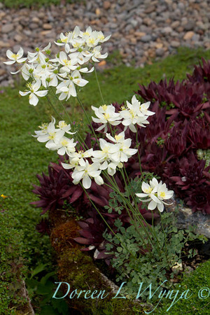 Northwest Garden Nursery__042