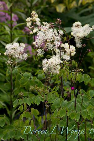 Northwest Garden Nursery__018