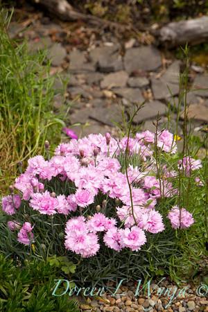 Northwest Garden Nursery__044