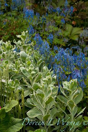 Northwest Garden Nursery__019