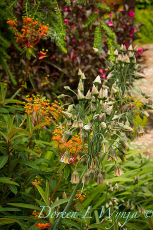 Northwest Garden Nursery__050