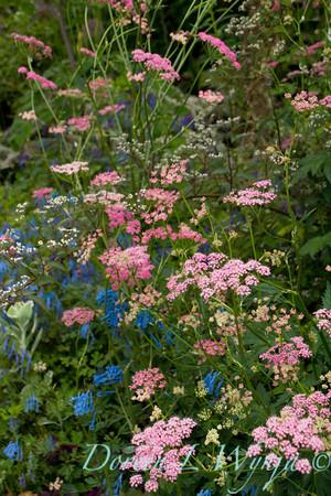 Northwest Garden Nursery__065
