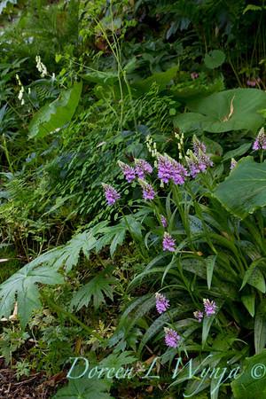 Northwest Garden Nursery__036