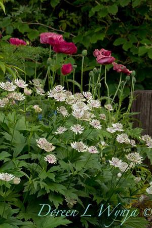 Northwest Garden Nursery__064